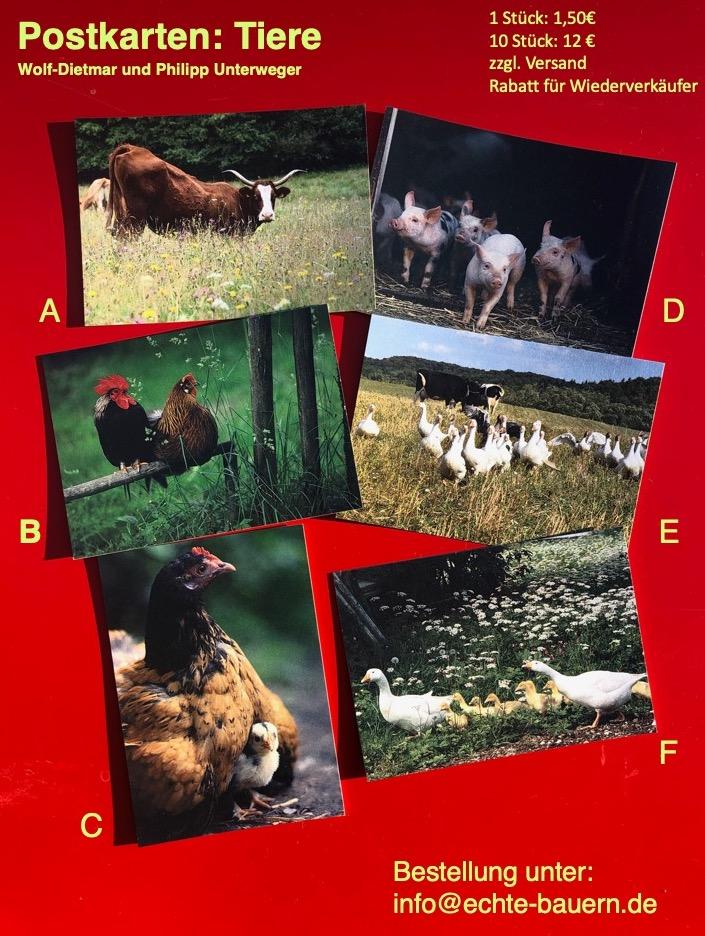 Postkarten_Tiere